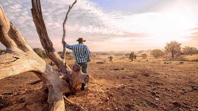 Farmer looking over drought-stricken land.