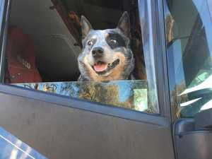 36 of the best trucking dogs who keep you company