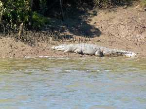 Investigators taking Gympie crocodile sighting seriously