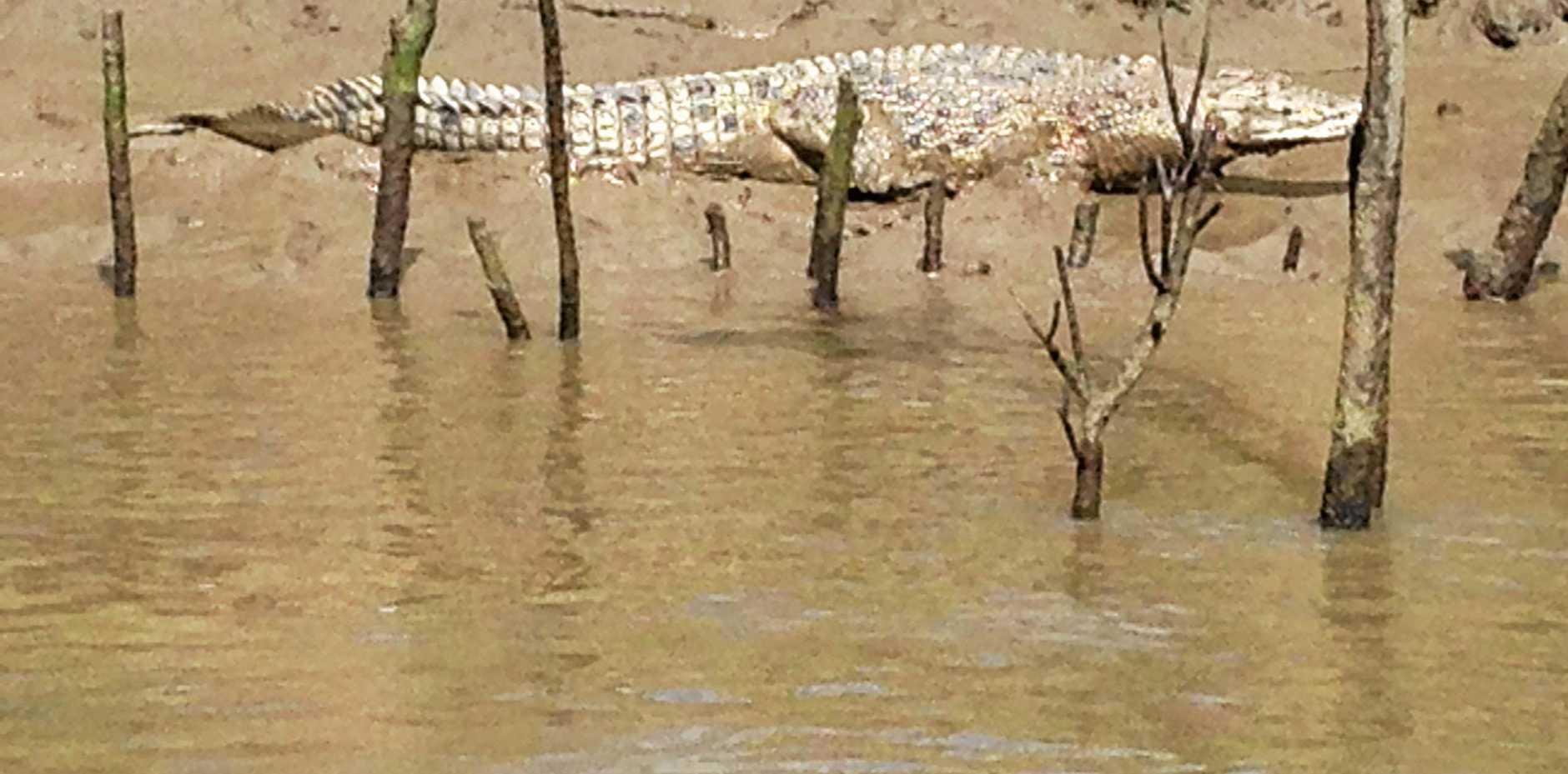 A past sighting of a crocodile in the Mary River.