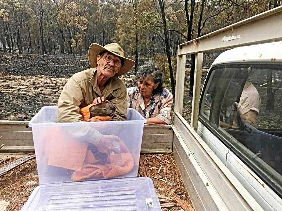 A koala was taken to a vet clinic by this couple who found it struggling near Wallangarra. Photo was captured by Marisa Ferrari.