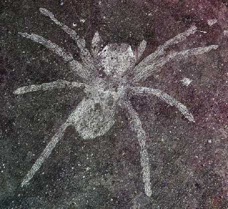 This new-found species of spider lived on our planet between 106 and 112 million years ago. Picture: Paul Sedan