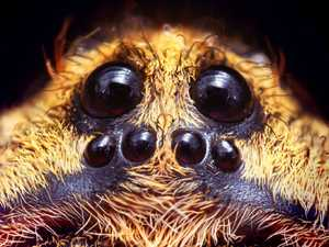 Fossilised ancient spider with glow eyes