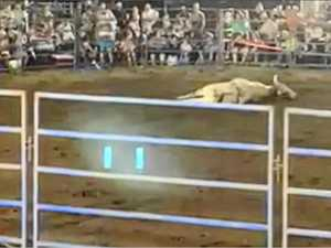 Bull collapses at Gympie rodeo