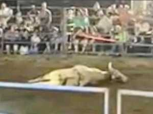 VIDEO: Vet, experts react to bull collapsing at Gympie rodeo