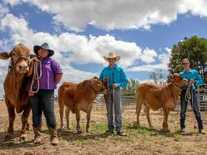 Studs prepare to debut next generation at futurity