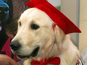 Prisoners teach dogs the basics