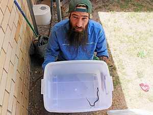 Snake catcher gifted dry bite for birthday