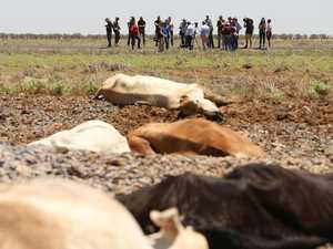 Shorten: Farmers should get compo for cattle losses