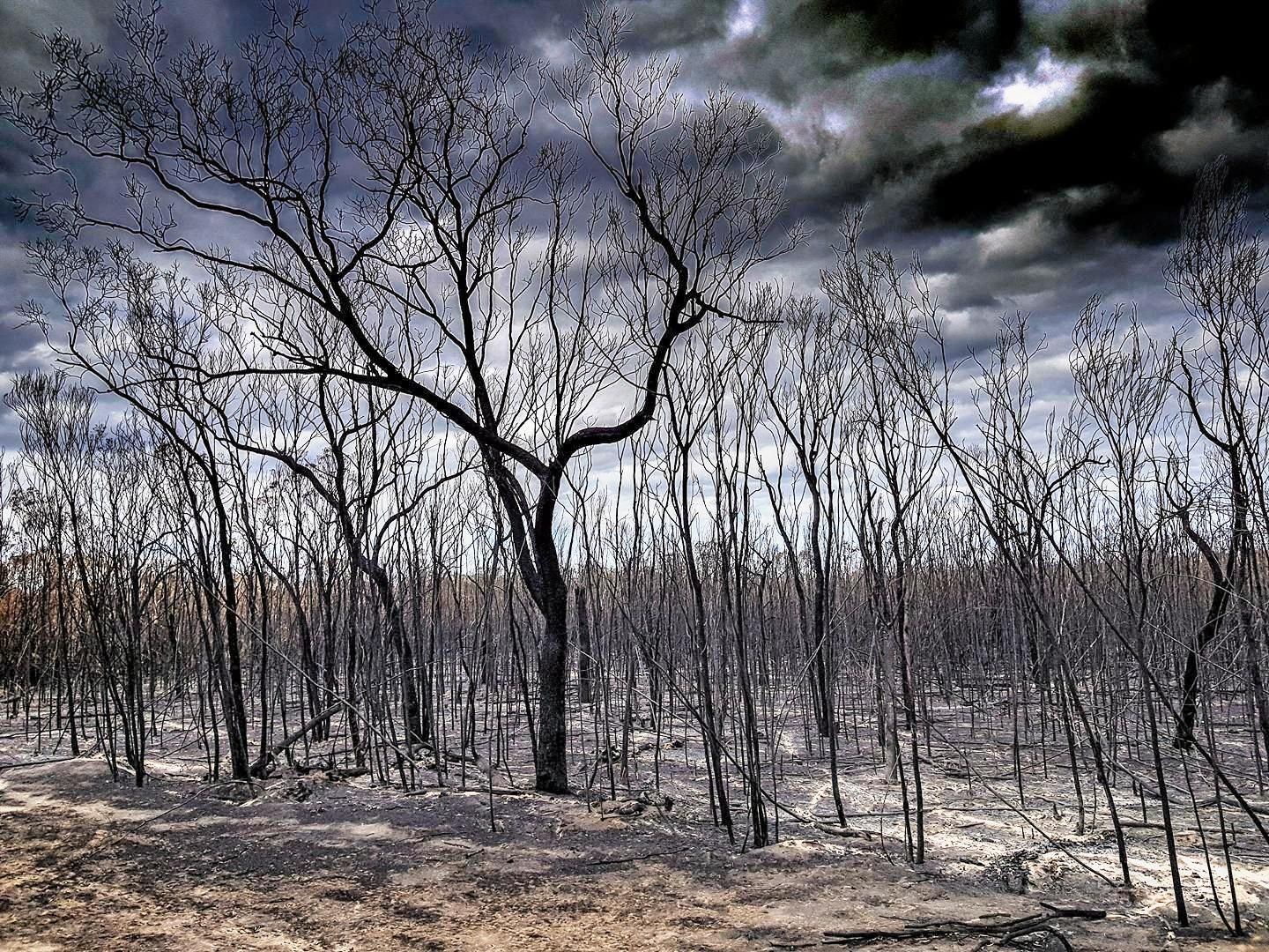 BUSHFIRE RECOVERY: Anyone feeling the effects of stress after the bushfires in Northern NSW is urged to seek assistance.