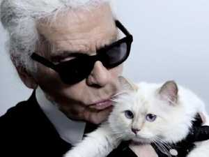 Karl's cat is now incredibly rich