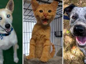 RSPCA's $29 adoption sale is on this weekend