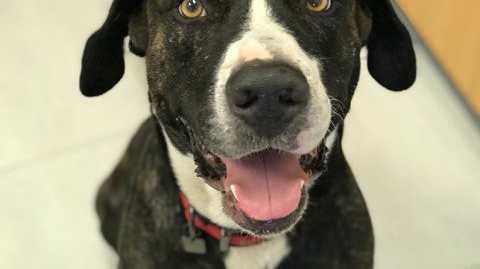 RSPCA now caring for dog after brutal bashing