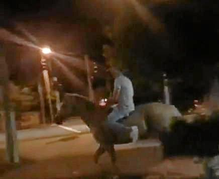 'NO JOKE': Unbelievable footage of a horse being ridden through the veranda of the Jockey Club Hotel was captured on February 9.