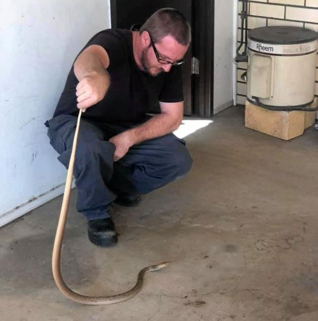 SNAKES AND COPPERS: Andrew Buckley with the eastern brown snake at Gin Gin station.