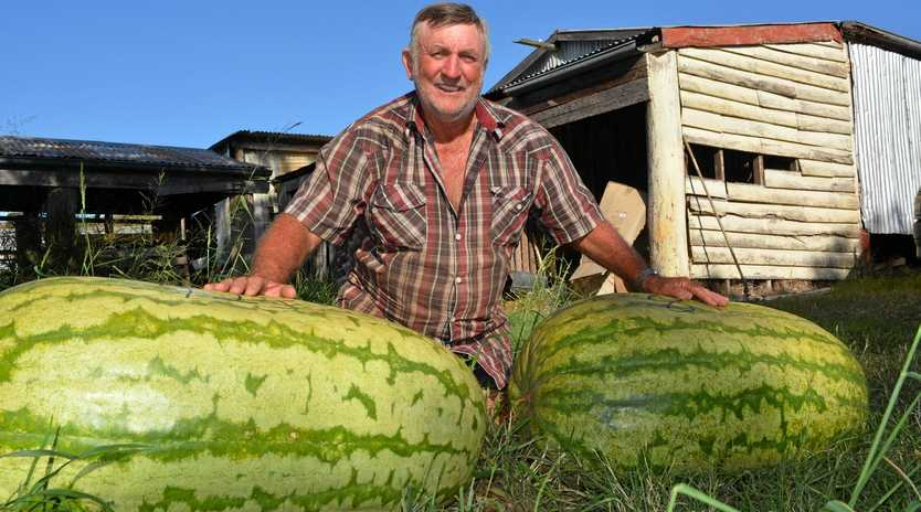 VITAMIN PACKED: Geoff Frohloff's watermelon weighed over 100 kilos, winning the heaviest melon award at the Chinchilla Melon festival last weekend.