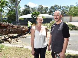 OMA'S DESTRUCTION: Fallen tree 'could have killed someone'