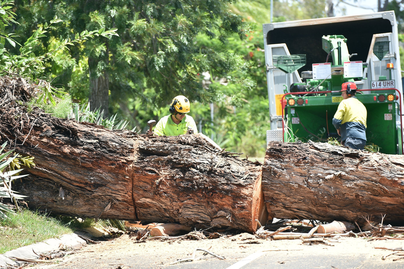 A tree that fell down at Mountain Creek could have killed someone, residents say.