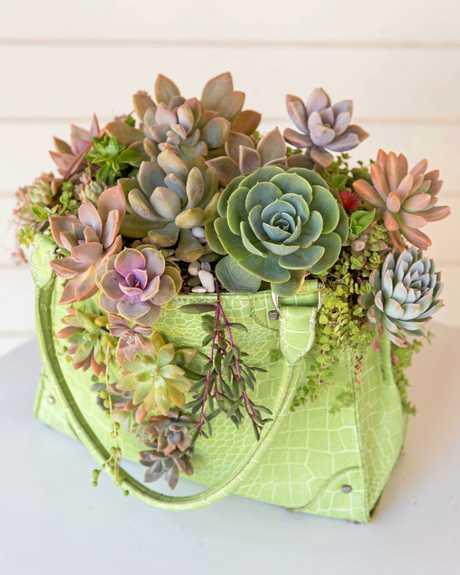 Deborah Groves' Succulent Artistry designs at Caloundra Street Fair.