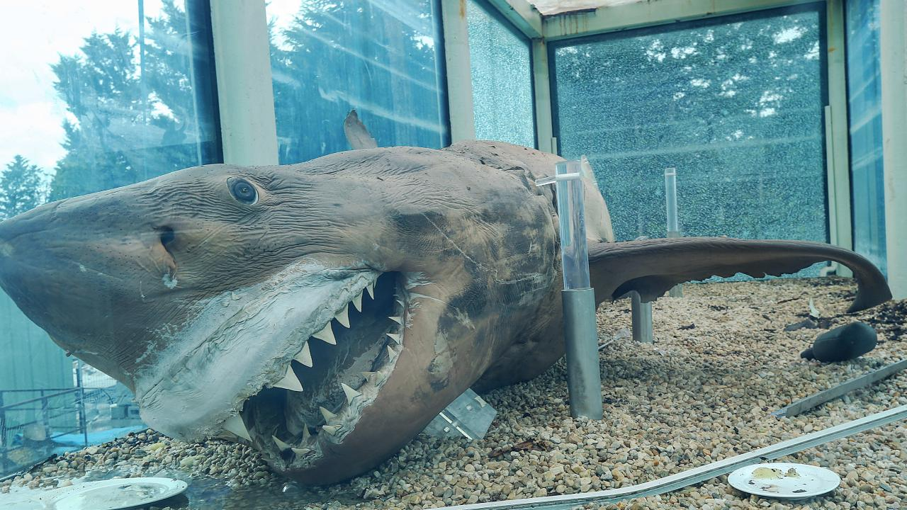 'Rosie' the shark is delivered to Crystal World Prehistoric Journeys Exhibition Centre in Devon Meadows. The Great White 5m length shark was caught in South Australia in 1998. Picture: Ian Currie