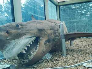 New plan for famously abandoned shark