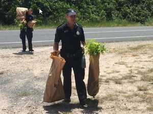 Oma thwarts drug crop found in mangroves