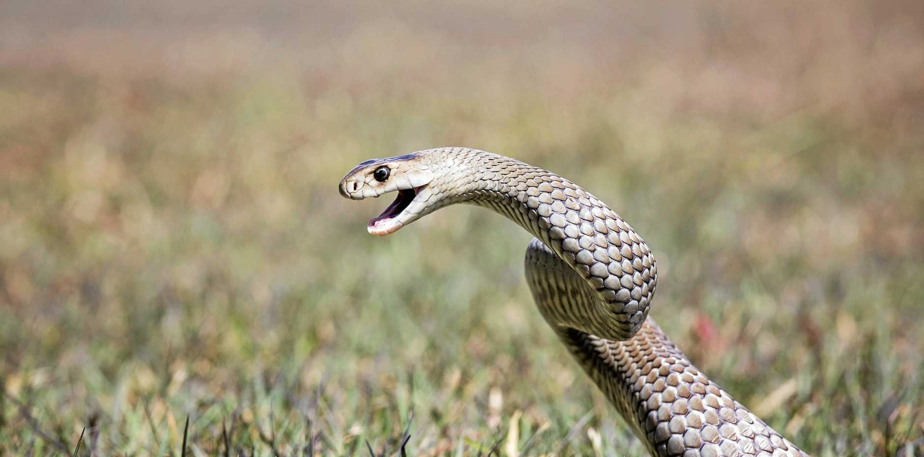 A woman in her 30s was bitten by a snake last night.