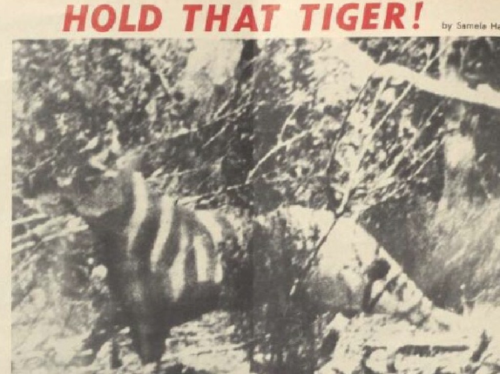 Grisly mystery of 'Tantanoola Tiger'