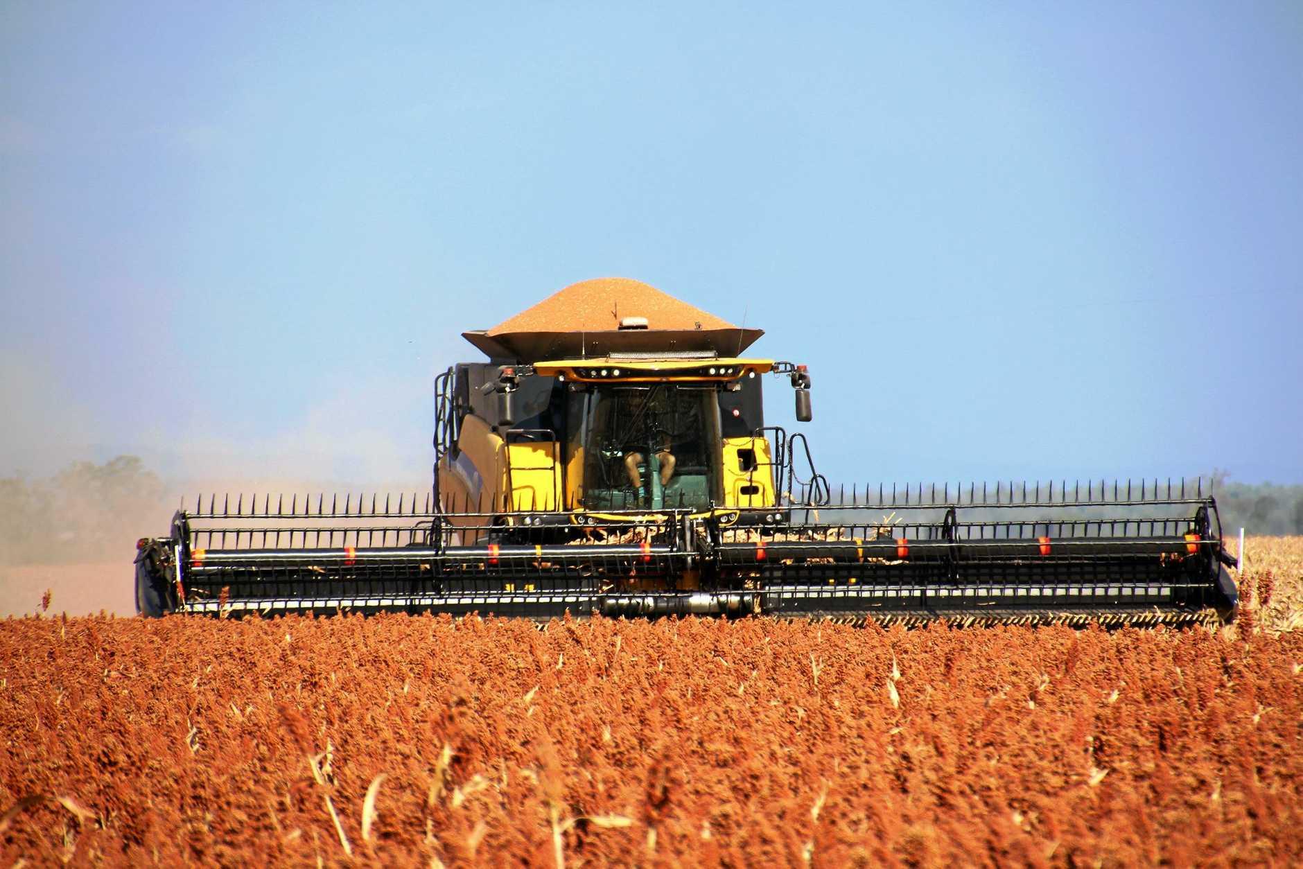 Sorghum harvest in full swing all around Langlands, near Jandowae, in the heatwave.