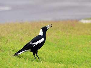 Investigation opened into Maryborough bird deaths