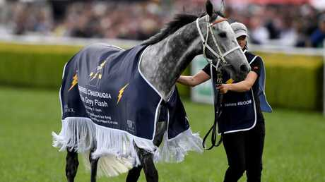 Chautauqua is paraded in front of the crowd prior to The Everest last year. Pic: AAP