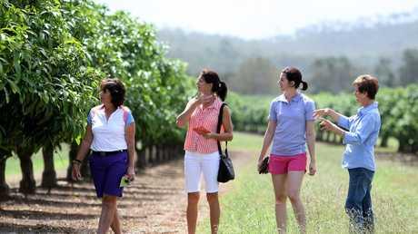 Mareeba's Milena Cek is running food tours on the Tablelands. Milena (right) with (L-R) Judi Steinke, Jan Bradley and Alissa Steinke at the Golden Drop winery outside Mareeba.