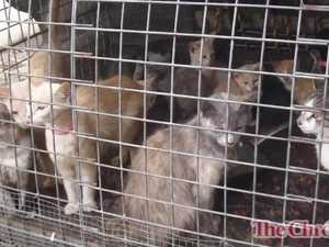 Cats dumped at Op Shop