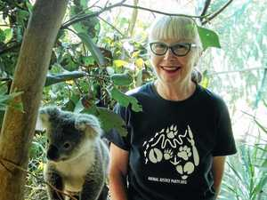 Hearder calls for koala action