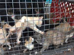 'APPALLING': Cats dumped outside RSPCA Op Shop