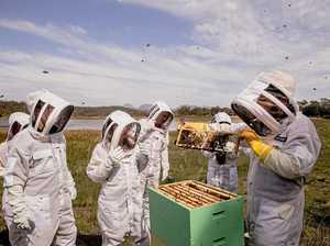 Freycinet hive-to-honey immersive experience