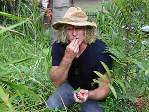 Taste edible weeds and bush food in foraging expedition