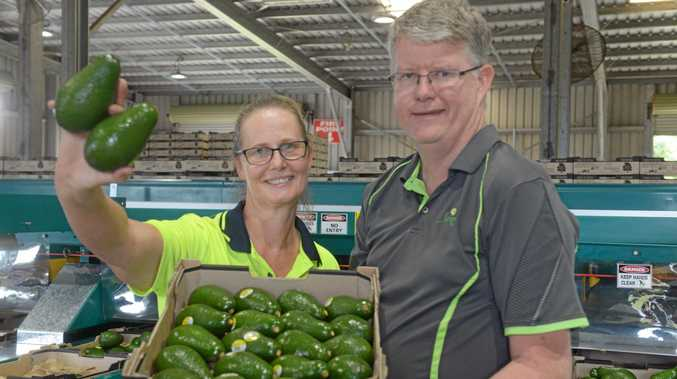 AVO GO OF THIS: Simpson Farms packing shed supervisor Michelle Gould and director John Walsh with some of this year's first harvest of avocados.