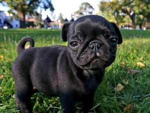 Taxman seizes family dog