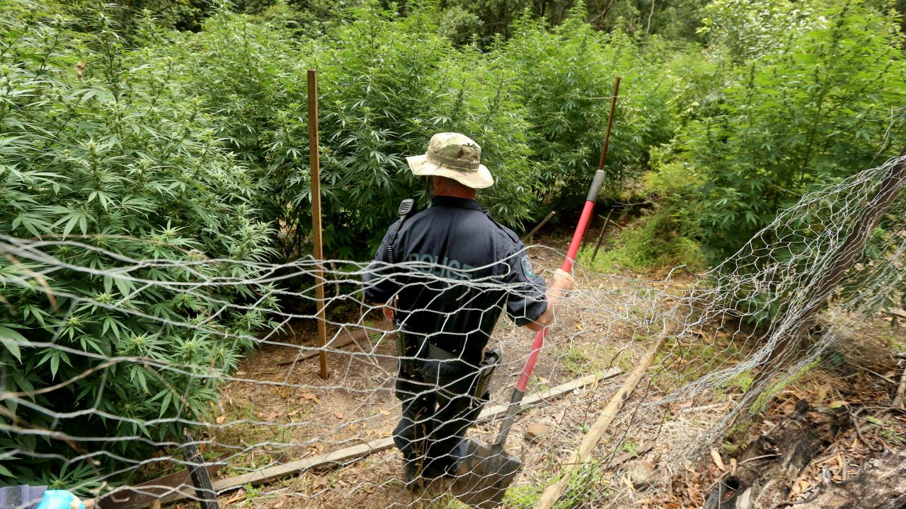 A number of illegal plantations have been found by police. Picture: Nathan Edwards