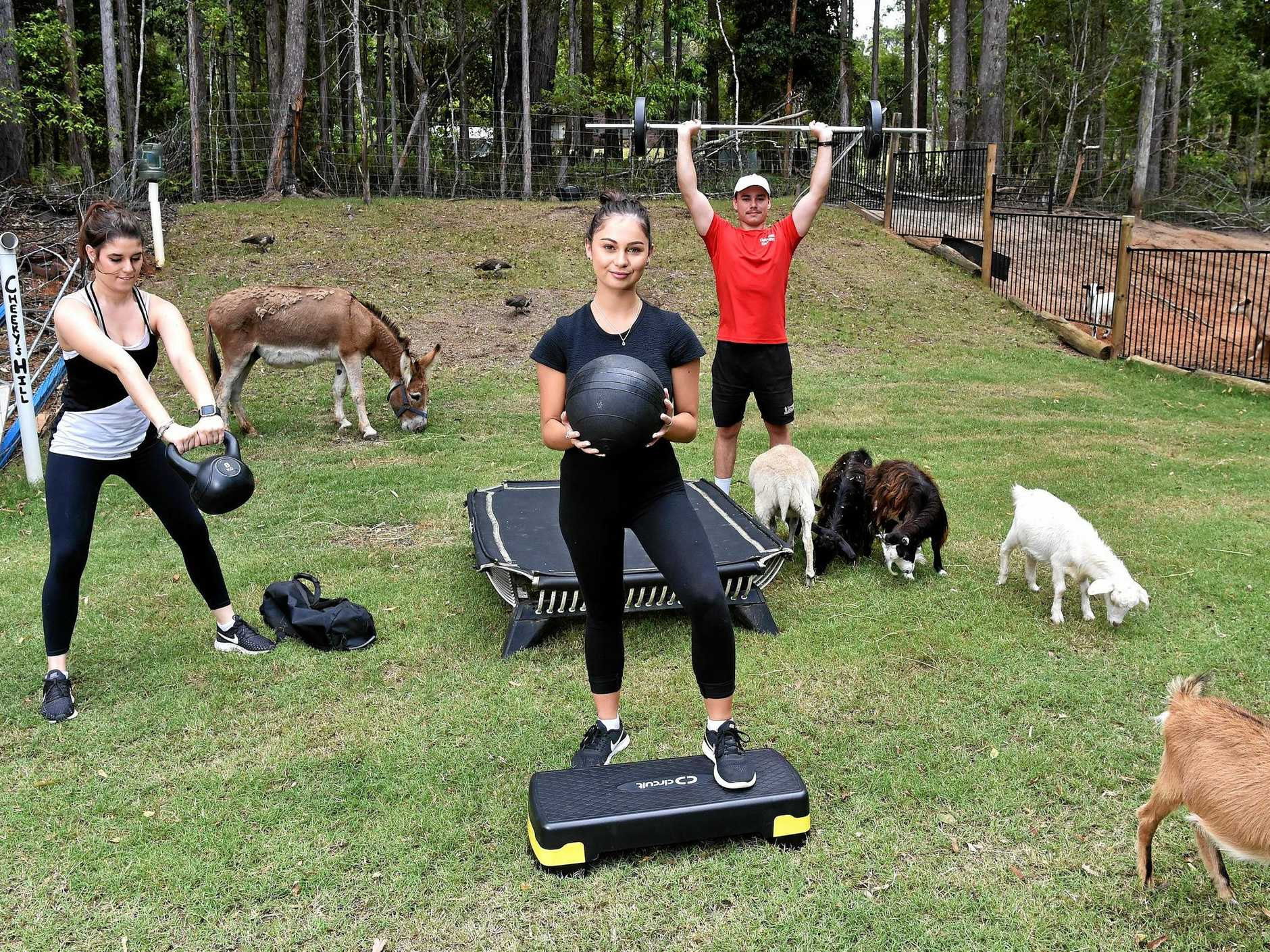 MAKING MOO-VES: Tanawha Farm Fit allows clients to exercise oustside alongside farm animals.Brittany-Jean Jones, Ella Tunbridge and Blake Jones working out on the farm.