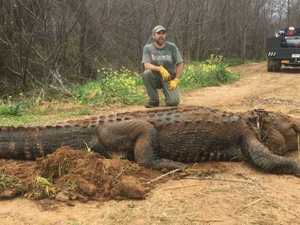 Monster 317kg alligator pulled from ditch