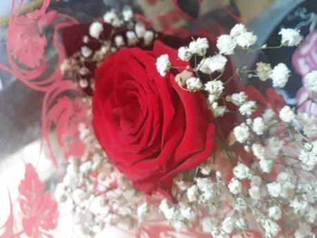 The beautiful rose.