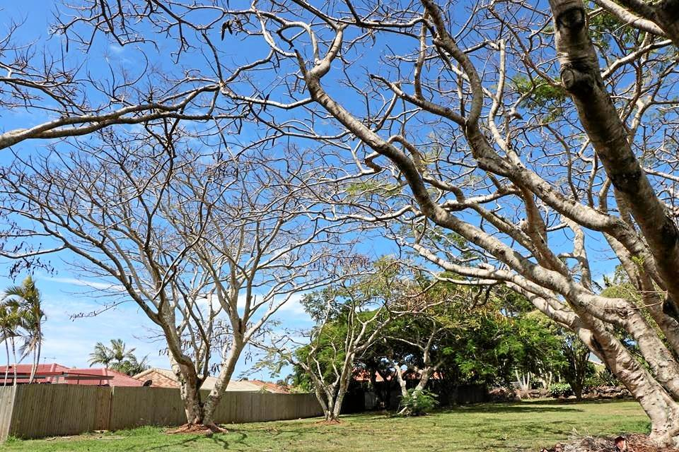 KILLED: Ratepayers will fork out $10,000 after popular Banora Point trees were destroyed.