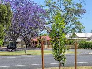 Natives out from under jacaranda's shadow