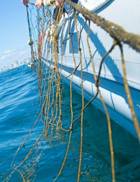 Shark nets were removed because of Oma.