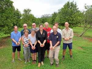 'Solid expectations' for 2019 local macadamia crop