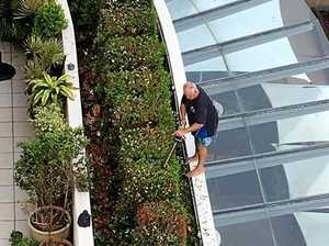 Man goes to great heights to keep gardens looking pristine