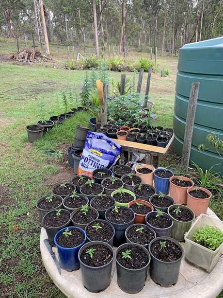 Officers have seized more than 570 cannabis plants in a major drug blitz across the Wide Bay Burnett, South Burnett, North Burnett and Sunshine Coast regions