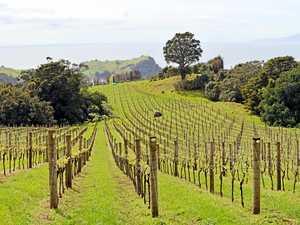 Waiheke Island boasts only about 30 winemakers